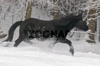 Pony im Schnee