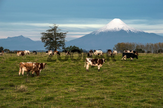 Idyllic landscape of Osorno Volcano, Lake Region, Chile