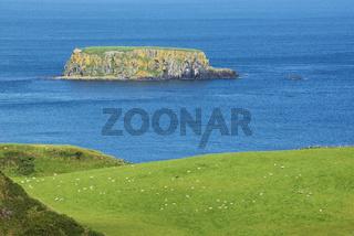 Schafweide an der Atlantikküste