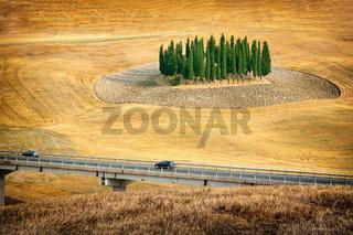 Grove of cypress in the Italian Tuscany.