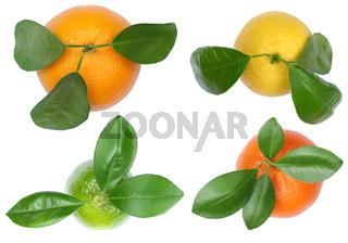 Sammlung Orangen Zitronen Mandarinen von oben Früchte Freisteller freigestellt isoliert