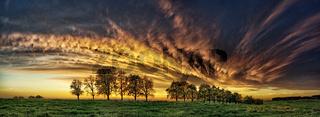 Baumreihe mit Wolkenfront