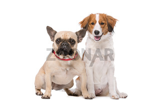 French Bulldog and a Kooiker Dog