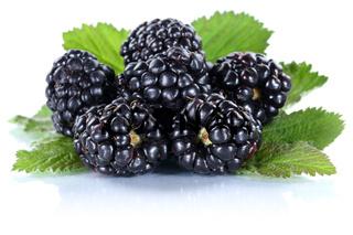 Brombeere Brombeeren Beeren Beere frische Frucht Früchte Freisteller freigestellt isoliert