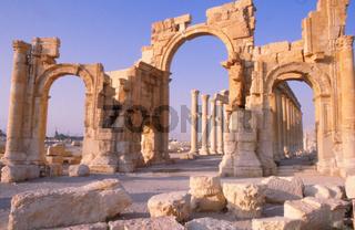 Palmyra vintage