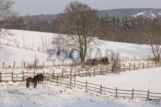 Pferdeweide im Winter