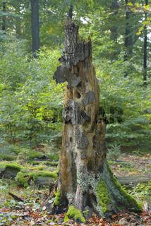 Alter Abgestorbener Baum