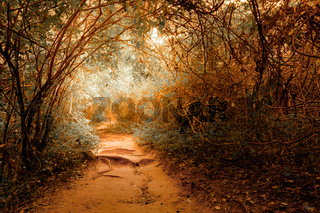 Fantasy landscape at tropical jungle forest with tunnel