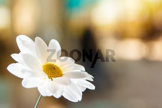 White Flowers in beautiful light