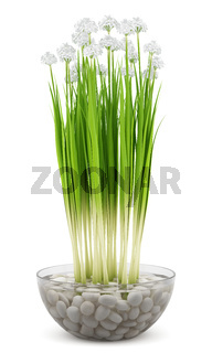 flowers in glass vase isolated on white background