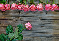 Pink roses rustic Valentines Day background