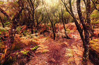 Forest in Madeira