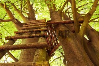 Leiter hinauf zum Baumhaus