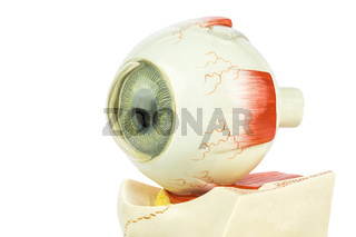 Artificial model of human eye