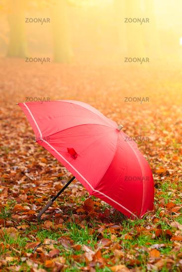 Red umbrella in autumn park on leaves carpet.
