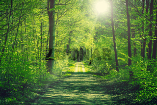 Road going through a green forest