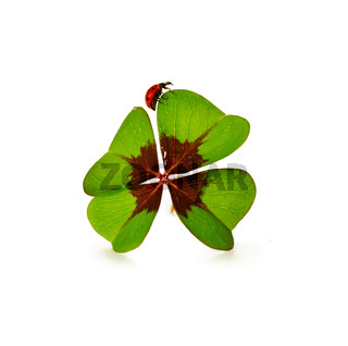Four leaf clover and ladybug isolated on white background
