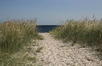 Dünenweg zur Ostsee.jpg