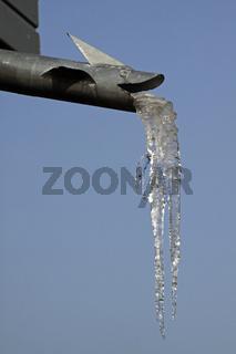 Eiszapfen an einem Wasserspeier