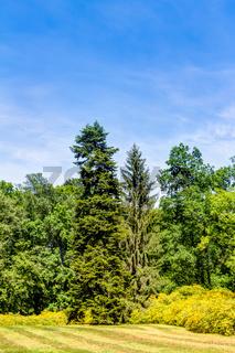 Azaleen- und Rhododendronpark in Kromlau