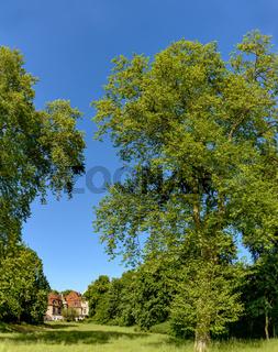 Majestätische Bäume im Park von Schloss Marquardt bei Potsdam
