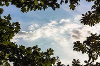 Wolken durchs Geäst
