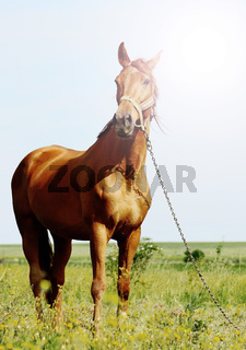 sunshine portraiit of a brown horse