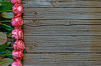 Side border of beautiful fresh pink roses