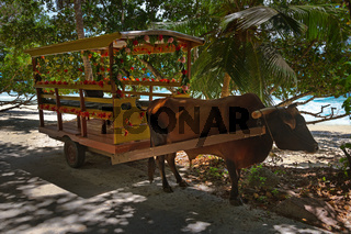 Buffalo cart for wedding ceremony - Seychelles
