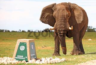 Elefant attackiert Wegweiser, Etosha, Namibia; african elephant attacks sign, Loxodonta africana