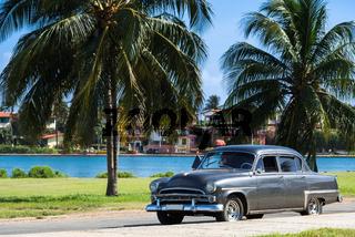 Amerikanischer Oldtimer parkt unter Palmen in Havanna Cuba