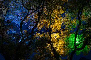 Trees at the park in China by night