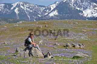 Traumhafte Krokuswiese mit Frau und Hund
