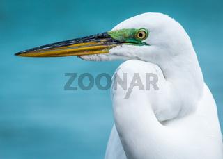 Egret at the Beach