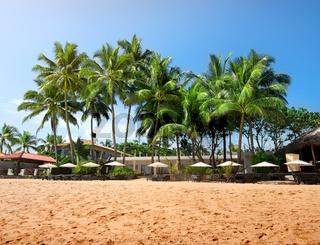 Palms on a beachfront