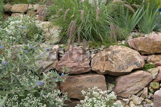 Steingarten; Trockenmauer; fuenf, Monate nach Bepflanzung