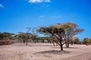 Savannah landscape in Tanzania, Africa