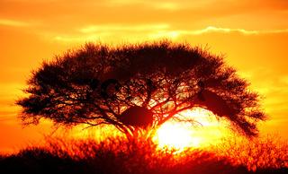 Sonnenaufgang Etosha-Nationalpark Namibia; sunrise at Etosha National park, Namibia