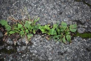 Pflanzen auf einer Teerstraße