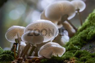 Pilze im Darsser Urwald, Nationalpark Vorpommersche Boddenlandschaft, Deutschland