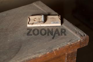 Rattenfalle auf einem Dachboden