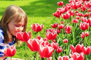 little girl smells tulips on the flower-bed