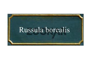 schild, pilz Cremeroter ,Lachsroter Taeubling, russula borealis