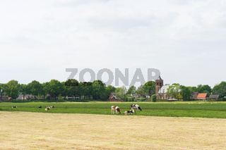 Agriculture landscape with farmhouse and cows