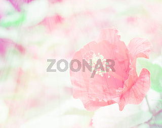beautiful abstract hibiscus red flower close up. Retro soft color effect hipster picture.