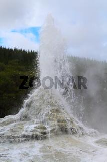 Lady Knox Geysert erupting in Rotorua