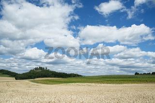 Weizenfeld im Hegau