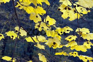 Herbstimpressionen, Herbst, Herbstblaetter