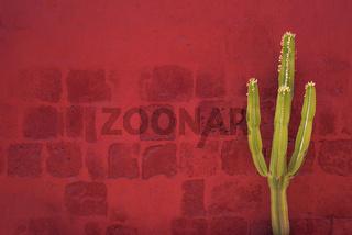 Green Cactus over red wall, Santa Catalina Monastery, Arequipa, Peru