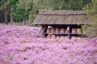 Bienenstock in der Lueneburger Heide